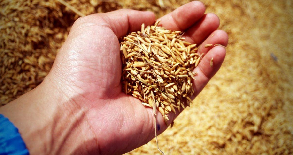 benefits of eating grain foods