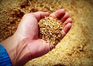 benefits of eating grain foods