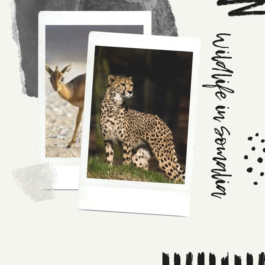 Wildlife-in-Somalia-1
