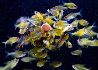 Fish dry foods