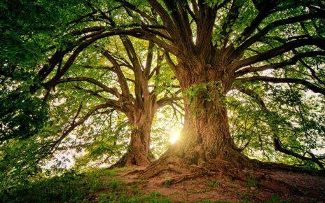 Tree Service Marketing